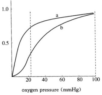 哪一个代表血红蛋白质的氧合过程