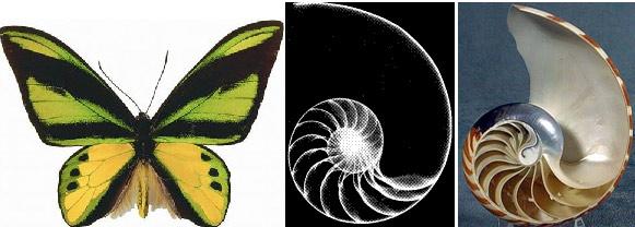 鹦鹉螺的曲线黄金分割构图也体现在网页构图上,如titter的ipad版.