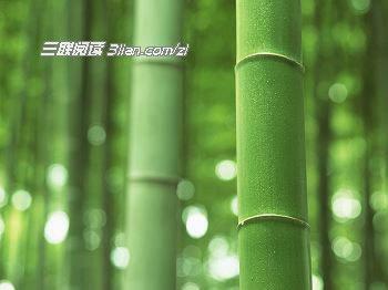 彩铅手绘春天竹子