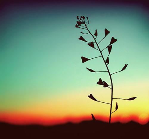 孤独是长在心里的一棵草