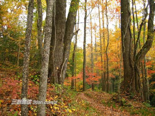 深色树林风景图片