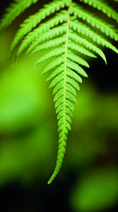 背景 壁纸 绿色 绿叶 树叶 植物 桌面 400_718 竖版 竖屏 手机